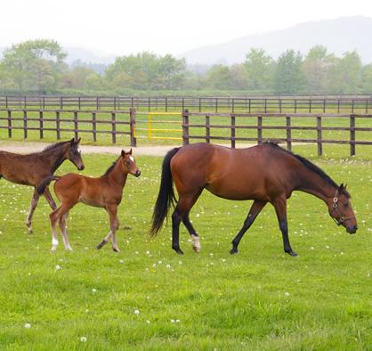 国産サラブレッド純度100%の馬プラセンタ